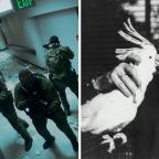 Gewinnt Navy Seals vs. Zombies oder Dürrenmatt: Eine Liebesgeschichte!